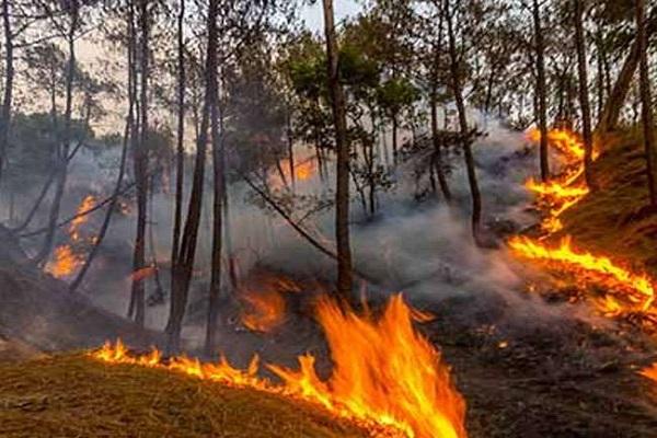 उत्तराखंड के जंगलों में लगी आग बेकाबू, सीएम रावत ने केंद्र सरकार से मांगी मदद